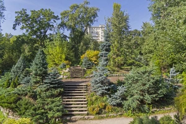Хвойные деревья в ботаническом саду
