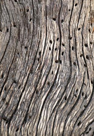 Трещины древесины фон