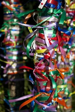 Разноцветные ленты на дереве