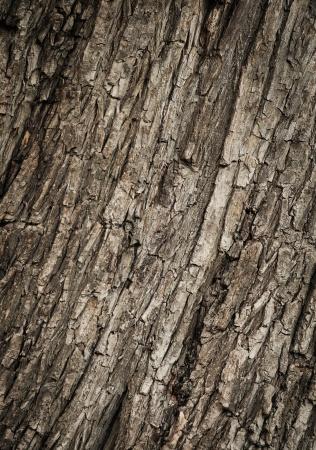 Текстуры коры древесины