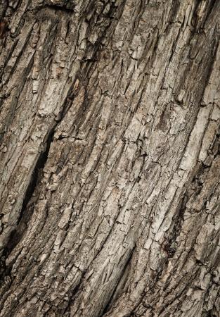 Текстуры древесины
