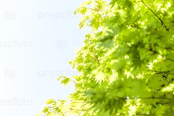 Зеленые листья на фоне голубого неба