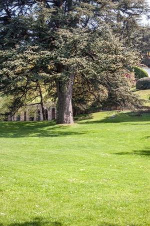 Ботанический сад с зелеными деревьями