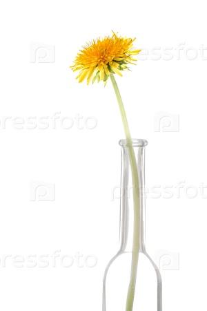 Одуванчик цветок в бутылке