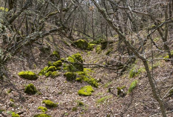Овраг в горном лесу